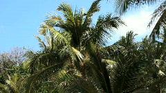 Palm leaf - stock footage