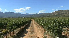 Road through vineyards in the Nemea Valley Stock Footage