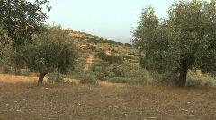 Olive grove near Mycanae Greece Stock Footage