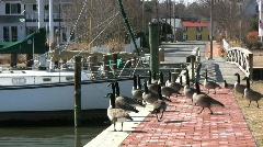 St. Michaels Maritime park Stock Footage