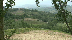 Vineyard in southern italy Stock Footage