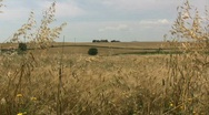 Grassland in central Italy Stock Footage