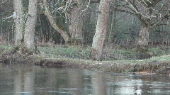 The river in forest Stock Footage