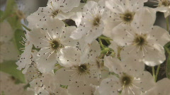 Tree Blossom Series One - 3 of 13 - stock footage
