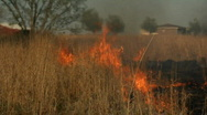Stock Video Footage of Brush Fire