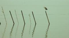 Flying heron Stock Footage