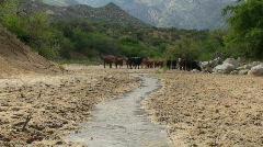 Cattle Landscape Stock Footage