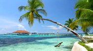 Tropical Paradise at Maldives with palms and blue sky Stock Footage