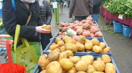 Stock Video Footage of Organic Produce Market