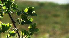 Sticker vine, wind, sunlight Stock Footage