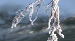 HOARFROST ON THE GRASS. Stock Footage