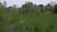 Miniature Dachshund running through long grass - stock footage