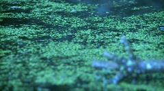 Duckweed on pond (HD) c Stock Footage