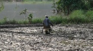 Stock Video Footage of man tilling paddy field