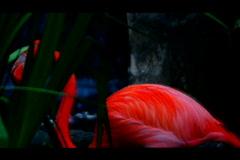 Sd animal mix 1 Stock Footage