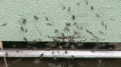 Honey Bees in the hive Stock Footage