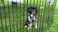 Stock Video Footage of puppy up for adoption