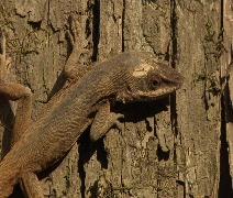 lizard time lapse - stock footage