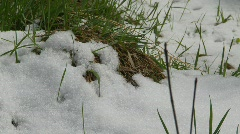 time-lapse, snow melting on grass - stock footage