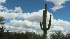 Saguaro Scenic Time Lapse - stock footage