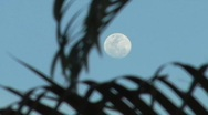 Stock Video Footage of Full moon behind palm trees 2