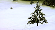 Pine tree in the snow Stock Footage