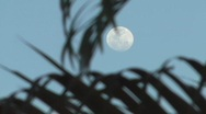 Stock Video Footage of Full moon behind palm trees 3
