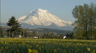 Stock Video Footage of Mt. Rainier 7