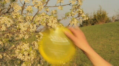 Disc Golf (frisbee) player getting disc from tree  Stock Footage