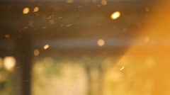 Pollen out focus on spring sunset Stock Footage