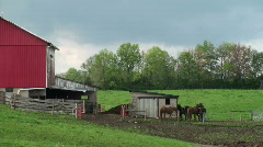 horses feeding by barn - stock footage