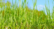 Stock Video Footage of Fresh spring grass