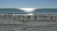 Seagulls at the Beach Stock Footage