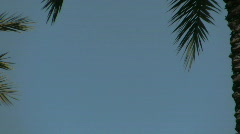 Beverly Hills in Los Angeles, California Stock Footage