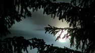 Full moon, pine trees and clouds at night Stock Footage