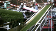 Conveyers in a tea factory Stock Footage