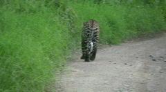 Leopardi merkintä alueella Arkistovideo