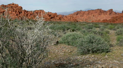 Bush in Valley of Fire desert Stock Footage