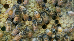 Bees In Hive - stock footage