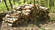 Stock Video Footage of Wood