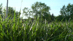 Grass in the breeze - stock footage
