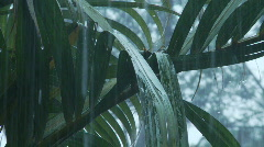 Palm rain Stock Footage