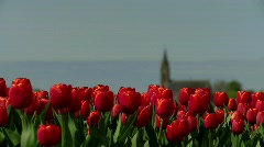 Tulips Church Holland Stock Footage
