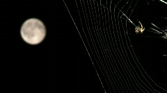 Spider and moon Stock Footage