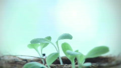 Plant seedlings timelapse growing - stock footage