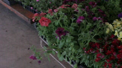Flower plants - Pan Stock Footage