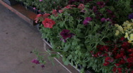 Stock Video Footage of flower plants - Pan