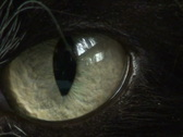 Stock Video Footage of Cat's Eye