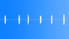 Woodpecker hammering 1 Sound Effect