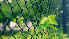 T181 chain link fence metal Stock Footage